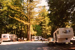 RV Park in the Redwoods